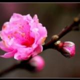 Lan Hoa