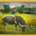 Trần Thị Thảo Dung