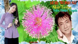 HOA TRINH NỮ (Trần Thiện Thanh) - Nhật Trường Mỹ Lan - Video 4K: Trần Ngọc