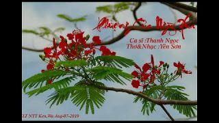 vT.Phượng Của Ngày Xưa  -- cs Thanh Ngọc -Thơ&nhạc Yến Sơn