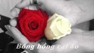 Bông hồng cài áo - Khánh Ly