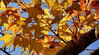 Glazunov - The Seasons Op.67 Autumn:Petit Adagio