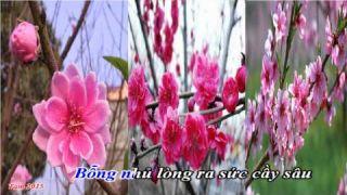 Hoa xuân (Hoàng Oanh) HD