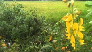 Một Cõi Đi Về - Khánh Ly (Trịnh Công Sơn)