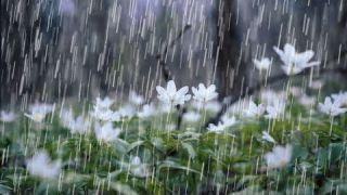Frédéric François Chopin - Waltz Rain