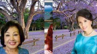 Mẹ (NV NS Nguyễn Đình Toàn, Nguyễn Linh Diệu) Tam ca Hương Lan - Video Super HD: Trần Ngọc