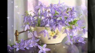 Good morning! I wish you a good day!...(music Giovanni Marradi)...
