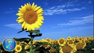 (VietSub & Lyrics) Seasons In The Sun-Những Mùa Nắng Ấm-Nhạc Ngoại