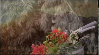SẮC HOA MÀU NHỚ -Nguyễn Văn Đông -Như Quỳnh & Thế Sơn -NNS (Super HD)