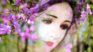 Mẹ Ngàn Hoa - Sơn Ca