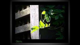 Cô Đơn- Nguyễn Ánh 9 Piano Solo -HKL (HD)
