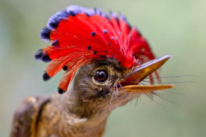 Những loài động vật quý hiếm khó có thể thấy