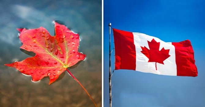 Vì sao Canada chọn hình ảnh lá phong đỏ để thêu lên quốc kỳ?