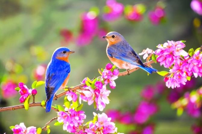 Hoài niệm Mùa Xuân