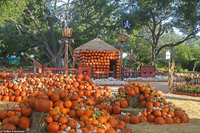 Ngôi làng đặc biệt được làm từ 100.000 quả bí ngô ở Mỹ