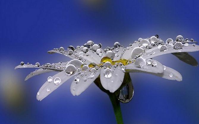 10 cách để chụp được những tấm ảnh về vẻ đẹp tự nhiên tiềm ẩn