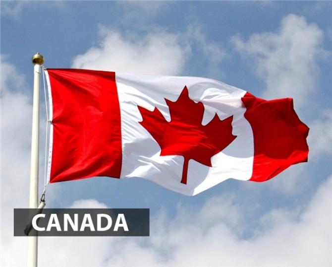 Vì Sao Lá Phong Đỏ Được Xem Là Biểu Tượng Của Canada?