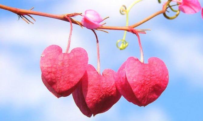Tình yêu có thể mang đến những phép màu